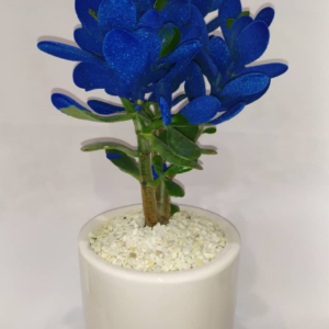 کراسولا طبیعی رنگ آبی