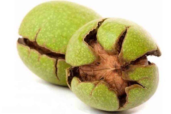 گردوی سبز