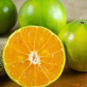 نارنگی سبز ژاپنی