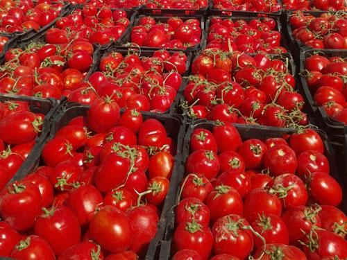 گوجه فرنگی رُبی زنجان